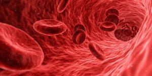 Blutzellen im Elektronenmikroskop - Ordination Dokror Peggy Lampel