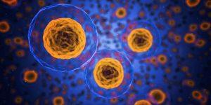 T-Zellen - Ordination Doktor Peggy Lampel Medizin